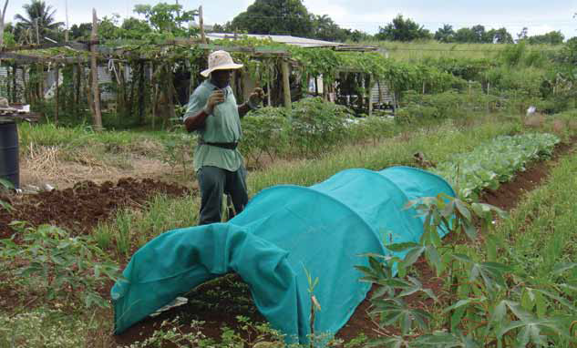 Local farmer utilising small-scale low-cost technologies. Photo:Travis Sinckler (UNEP)